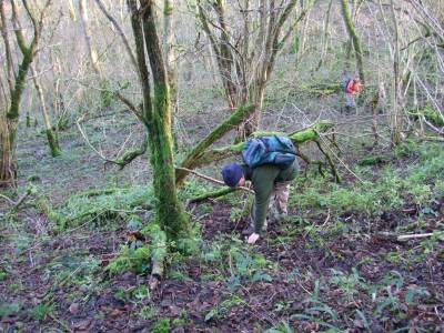 DMG members looking on ground in woodland for hazel nuts